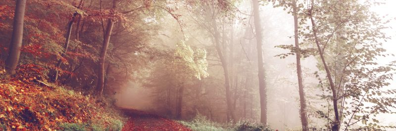 autumn-woods